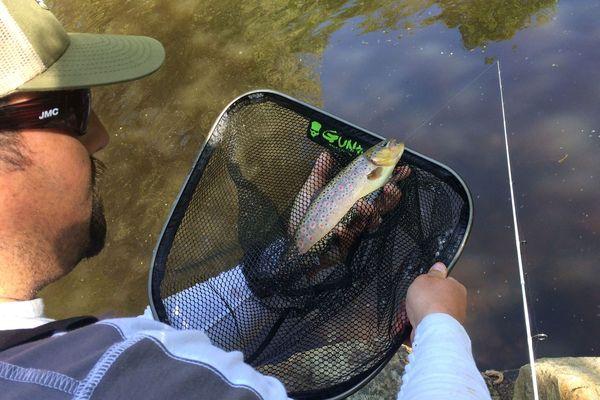 Les poissons savent se faire désirer...