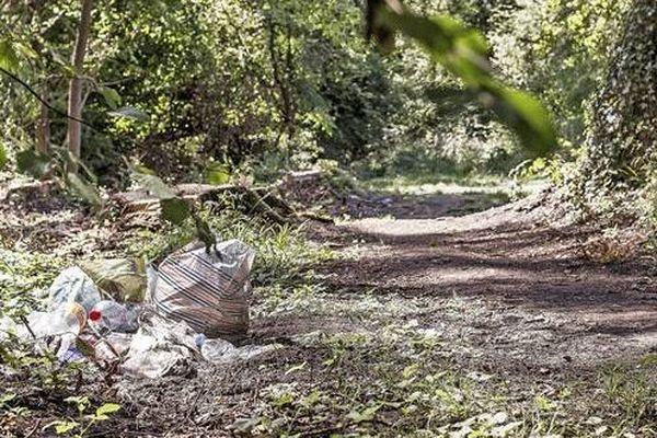 Des déchets déposés en forêt