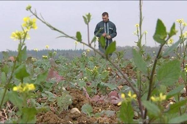 Des terres agricoles parfois enclavées, grignotées petit à petit par le milieu urbain