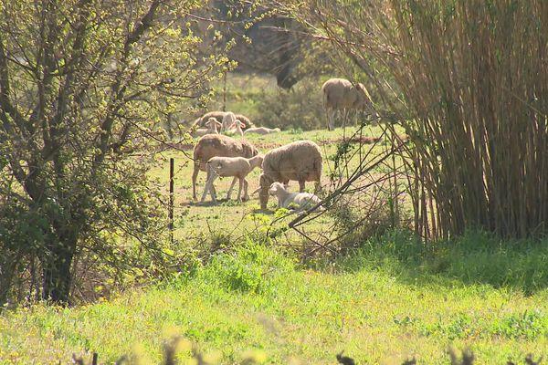 Un troupeau de moutons et un centre équestre à proximité du futur lieu d'implantation de l'antenne.