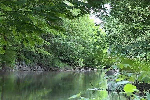 Au bord du canal et de la Vesle, les moustiques sont en masse et leurs nombreuses piqures sont parfois très douloureuses.