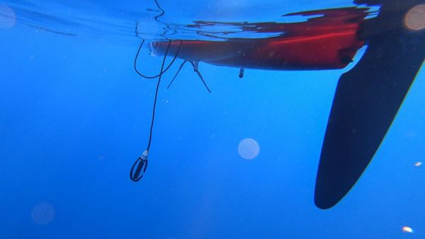 Ecoute des fonds sous-marins et observations de l'équipe de CorSeaCare