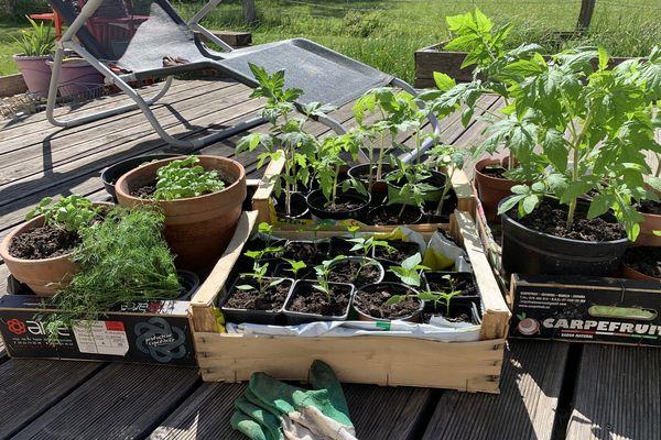 Un petit bain de soleil chaque jour pour vos plantations et surtout un retour à l'intérieur en fin de journée vont les aider à se fortifier.