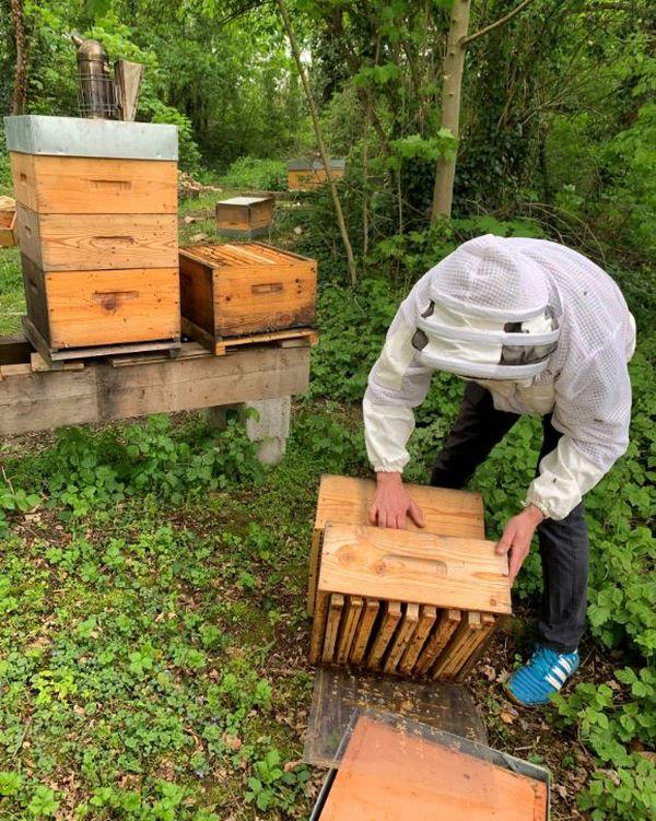 Erwan Grandgirard ramasse ses trois ruches vandalisées dans le Parc de l'Orangerie à Strasbourg.