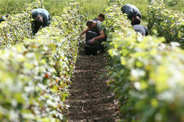 10% de l'AOC Champagne est produit dans le sud de l'Aisne