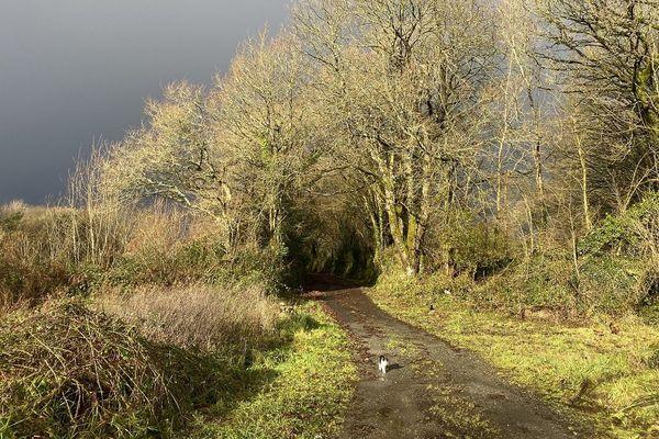 Petit chat au milieu du chemin et grisaille dans les Côtes d'Armor