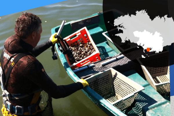 Pratiquée par certains ostréiculteurs, la pêche à la palourdes dans le Golfe du Morbihan représente une source de revenu complémentaire.