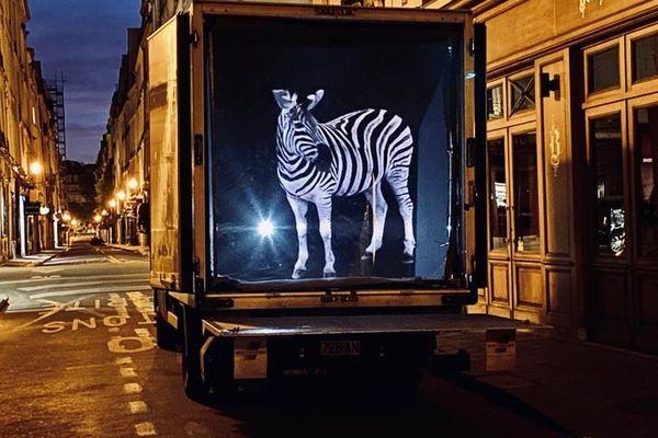 """Le réalisateur Alexandre Zanetti projette ses """"Zoologrammes"""" dans les rues de Paris pendant la durée du confinement."""