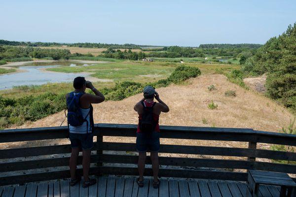 Le parc ornithologique du Marquenterre est un endroit privilégié pour observer les oiseaux en Baie de Somme