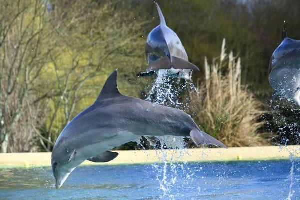 Les dauphins de la Cité Marine de Port-Saint-Père