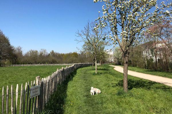Dandy se promène au Parc du Landry à Rennes
