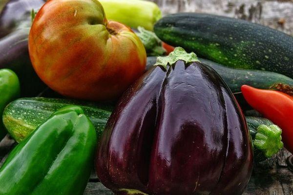 Photo d'illustration - Légumes du potager