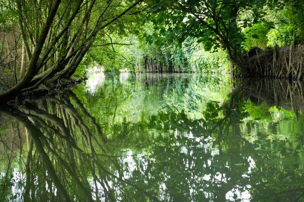 Le Marais Poitevin, une merveille de la nature.