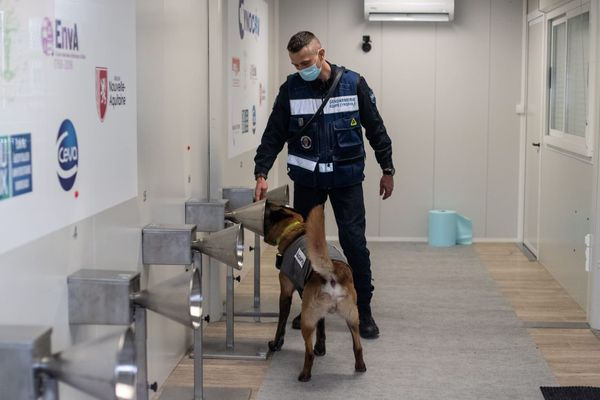 Des chiens formés à la detection de la COVID-19. Ici en en Nouvelle Aquitaine en janvier dernier.