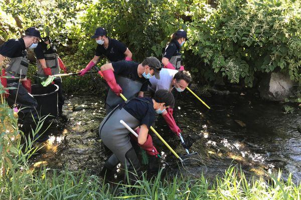 Scientifiques et bénévoles de la Fédération de pêche du Haut-Rhin étudient la santé des rivières des vallées du massif vosgien