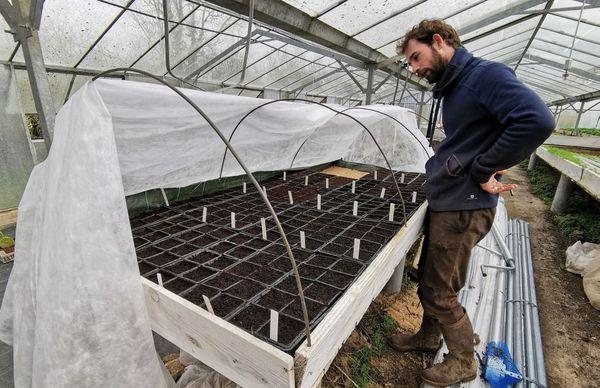 Alexandre Melin, maraîcher bio, veille sur ses semis plantés tout récemment.