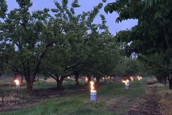 Les arboriculteurs alsaciens ont eux aussi lutté contre les effet du gel avec le feu