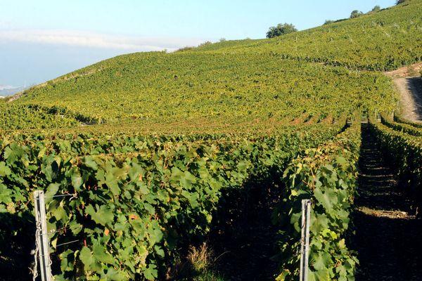 Une exploitation viticole à Chignin (Savoie) le 29 septembre 2010.