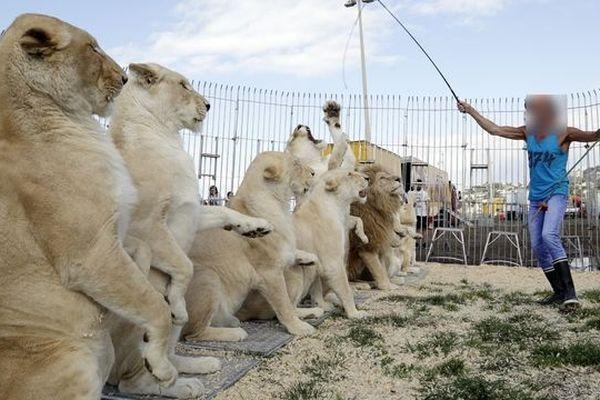 Le conseil municipal de Montpellier a adopté mercredi soir, un voeu visant à interdire les cirques avec des animaux sauvages dès le 1er janvier 2019.