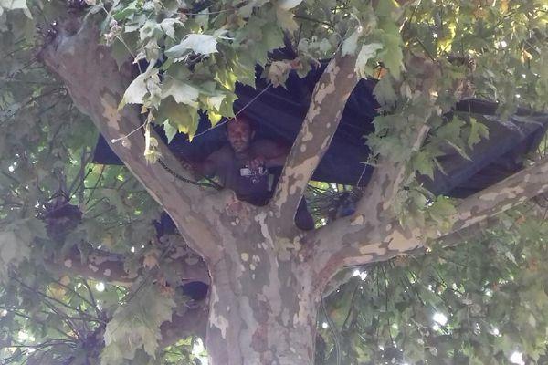 Le grimpeur arboriste Thomas Brail s'est juché sur un platane pour s'opposer à l'abattage de plusieurs arbres des promenades à Condom