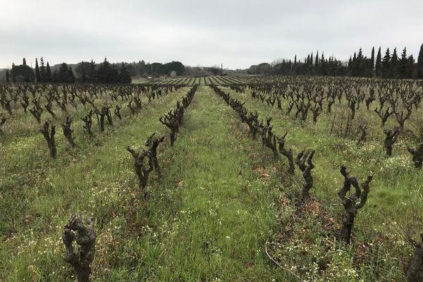 En Occitanie, le nombre de vignes cultivées en bio est en augmentation constante : on trouve l'Hérault et le Gard sur les deux premières marches du podium avec près de 12000 hectares respectifs.