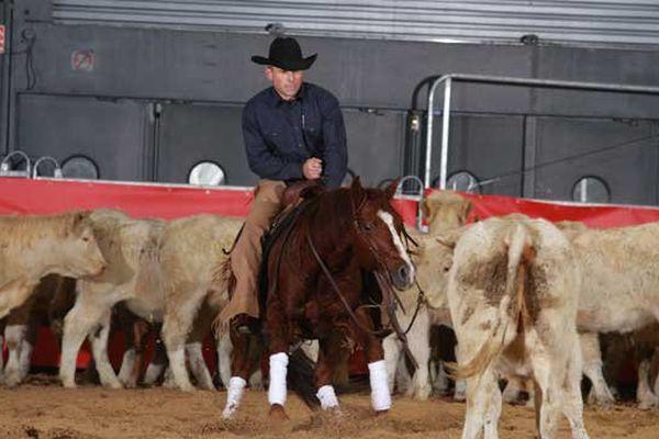 Discipline très populaire aux Etats-unis le cutting est né du travail au ranch à la fin du 18e siècle. Chaque veau devait être isolé du troupeau pour être marqué, soigné puis regroupé dans différents lots.  Le cutting devint un sport lorsque les cowboys organisèrent les premiers concours afin de déterminer quel était le meilleur cheval pour isoler les veaux.