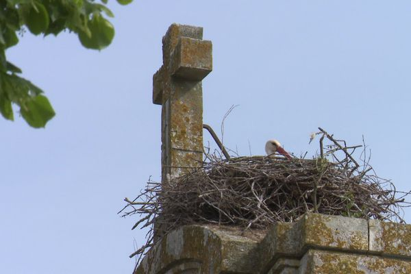 Les clochers aussi abritent des cigognes