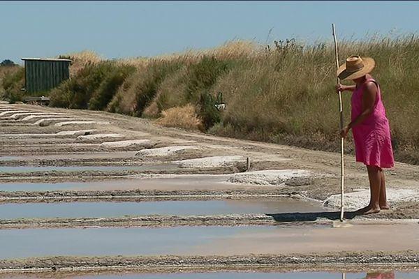 La récolte du sel a commencé il y a quelques semaines sur l'Île de Ré et la saison s'annonce très bonne.
