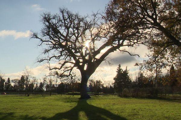 Le chêne du lycée agricole de Castelnaudary a été planté sur l'ancien domaine Saint-Jean au 18ème siècle.