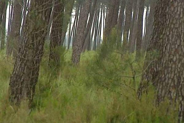 Les sylviculteurs sont très inquiets pour la survie des arbres et comptent réclamer des indemnisations en cas de dommages