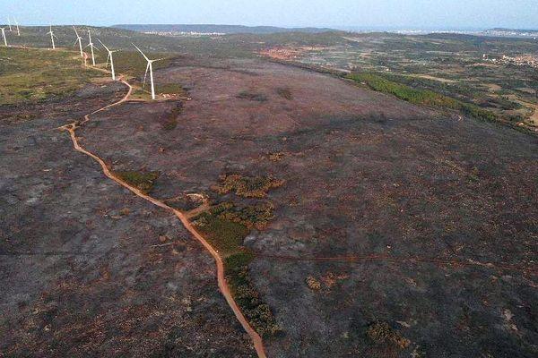 A Saint-Pargoire dans l'Hérault, l'incendie a ravagé 300 hectares le 18 août 2021.