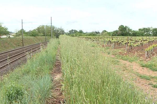 Un chemin de campagne à proximité de Saint-Alexandre, village situé près de Bagnols-sur-Cèze dans le Gard.