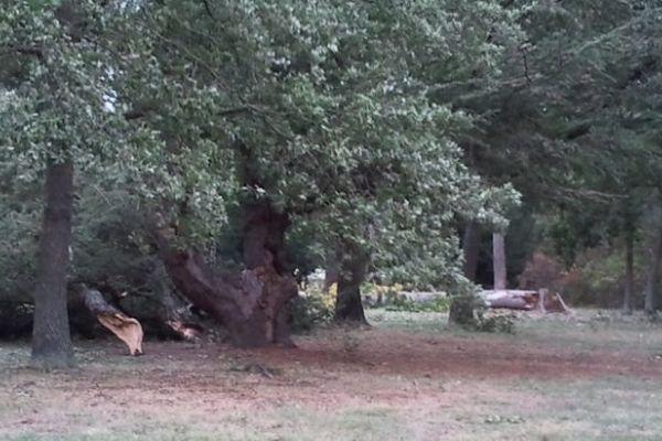 Des arbres arrachés dans le parc de Plaisance-du-Touch (Haute-Garonne)