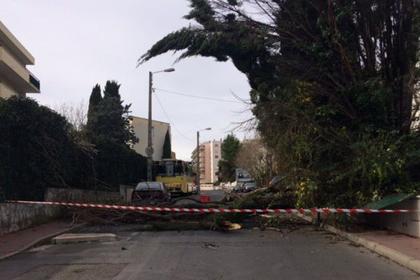 Un arbre du consulat du Maroc déraciné samedi 4 mars 2017 en raison des vents violents.