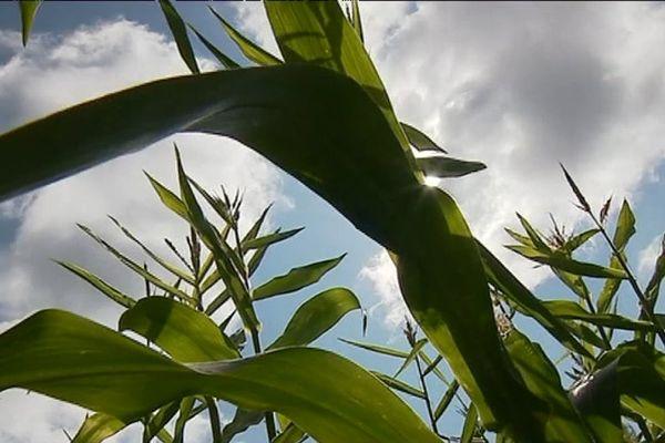 Agriculture raisonnée en Dordogne, une orientation intéressante