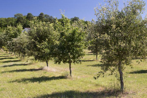 Julien Cornillet offre 300 chênes à la ville de Montélimar pour compenser l'empreinte carbone de sa campagne des Municipales