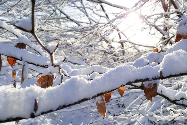 Première neige dans l'Orne - 13 janvier 2017