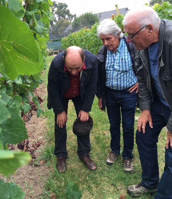 Inspection du vignoble du Coteau du Braden à Quimper