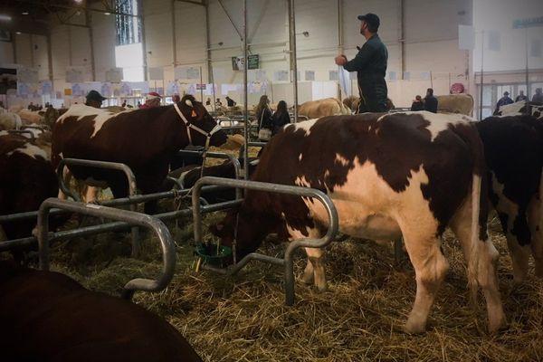 À Agrimax 2018, 540 des 700 animaux présents sont des bovins
