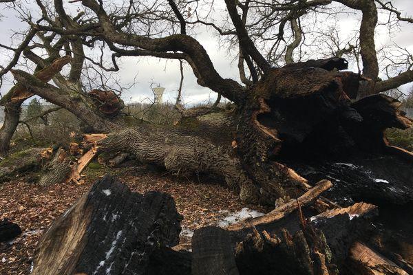 Le chêne de la Matauderie n'a pas résisté à cet incendie criminel. L'intérieur du tronc est calciné.