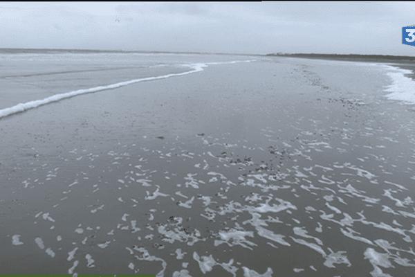 Des boulettes de pétrole ont été apportées par la marée haute sur la plage de Saint-Brévin-les-Pins
