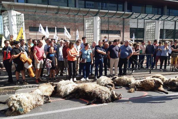 Une dizaine de brebis mortes devant la sous-préfecture de Bayonne.