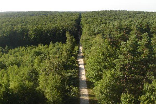 La forêt domaniale d'Orléans s'apprête à dévoiler ses secrets. Grâce à des informations recueillies par un laser, l'Office national des forêts va pouvoir en savoir plus sur sa végétation et son relief.