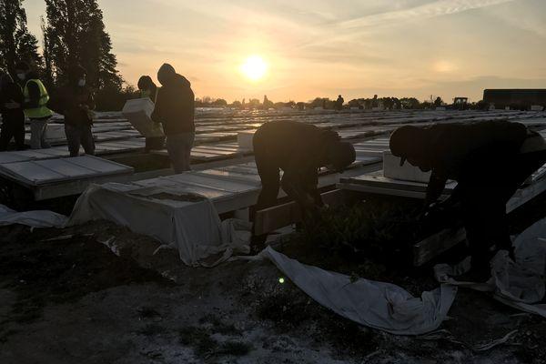 A Machecoul (Loire-Atlantique), des demandeurs d'asile sont recrutés chaque année pour la récolte du muguet grâce à l'association AMI.
