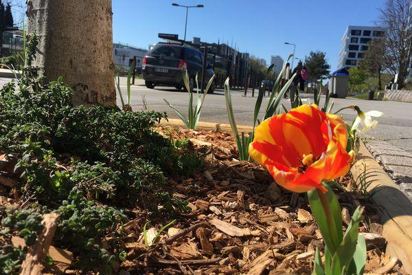 Chaque année au printemps, Nantes Métropole distribue des graines pour faire pousser des fleurs.
