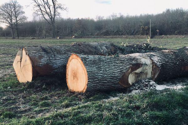 Sur le bord des routes de la Mayenne de nombreuses haies ont disparu et des arbres sont abattus