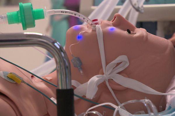 Le cobaye idéal pour se former au geste de réanimation sur un patient atteint de Covid-19