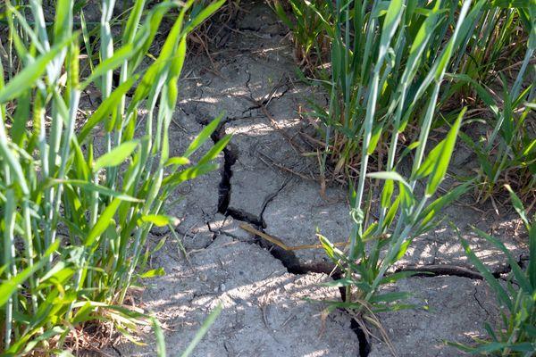 La préfecture de l'Allier alerte la population sur l'état de sécheresse du département et prend des mesures de restriction.