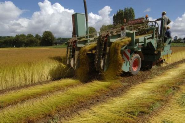 Après la réunification, la Normandie sera le première région productrice de lin au monde.