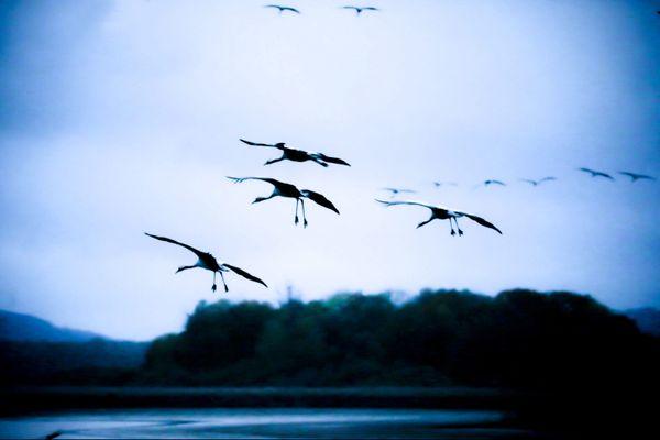 La menace de l'influenza aviaire plane sur les communes littorales de la Vendée